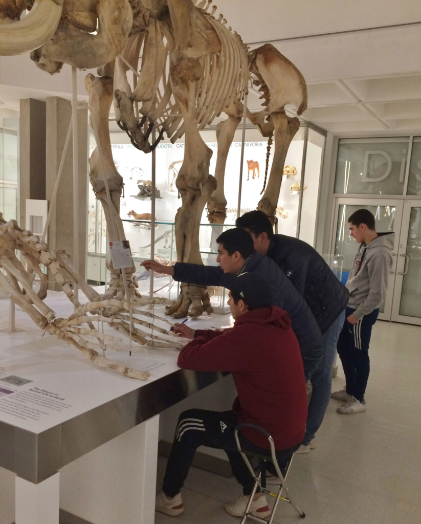 students look round the museum of zoology